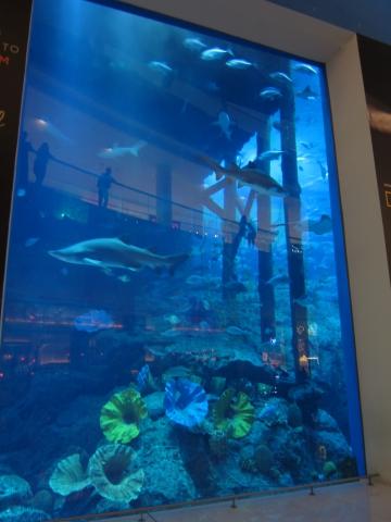 20141212_Dubai-Riesen Aquarium in Dubai Mall