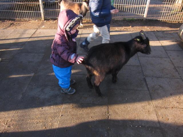 20140105 Paula und die Ziege 2